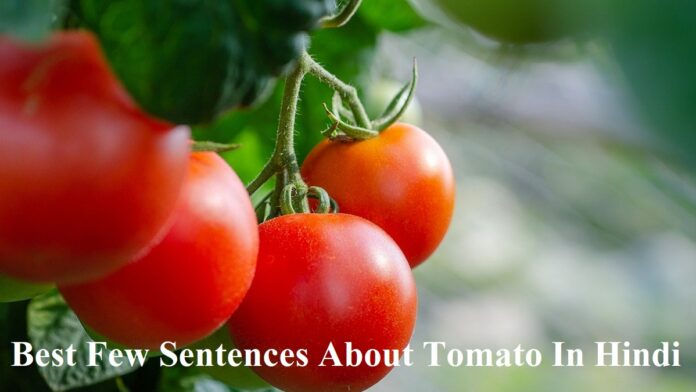 10 Lines on Tomato in Hindi for Class 1