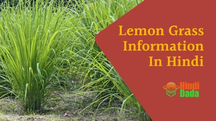 Lemon Grass Information In Hindi