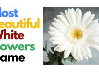 White Flowers Name in Hindi