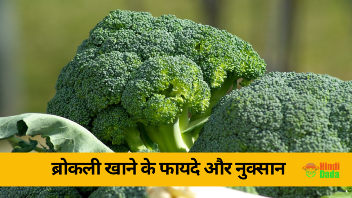 Broccoli Information in Hindi