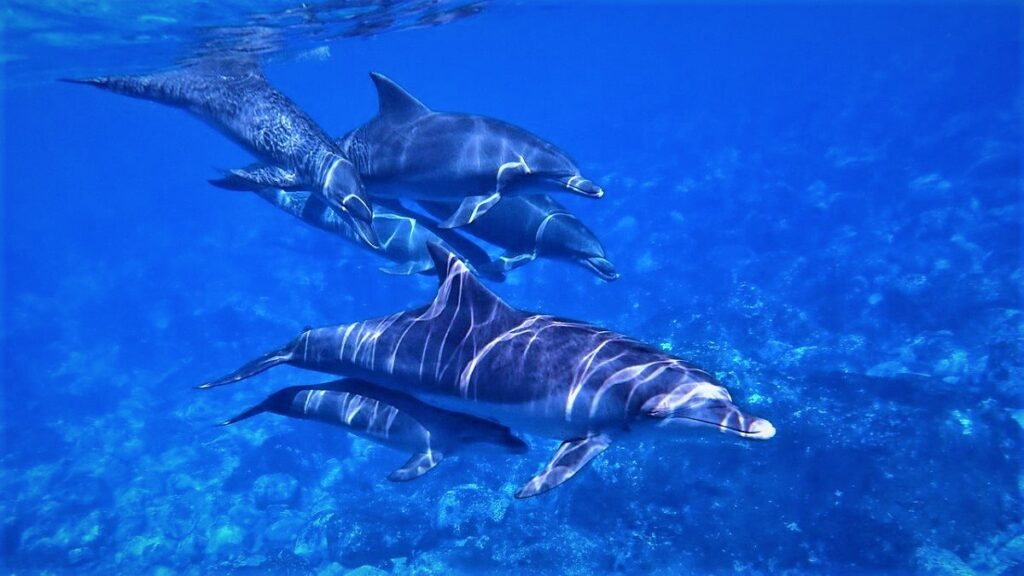 Dolphin Information in Hindi